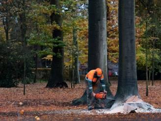 Gemeentepark krijgt 79 nieuwe bomen