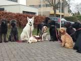 Bed & breakfast voor honden: 'een feest voor het oog'