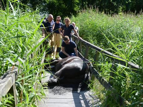 Paard gewond dat door bruggetje Madestein zakte