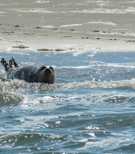 Met een luxe jacht naar de Zeehonden kan deze zomer voor het eerst vanuit Goes