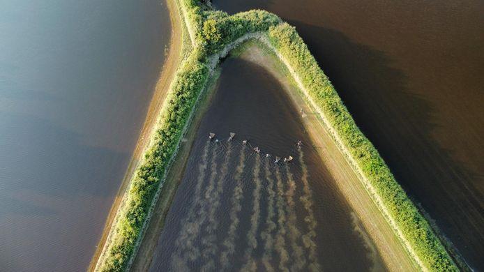 Naar vissen speuren in ondergelopen weiland bij Oeffelt. Een drone zoekt mee.