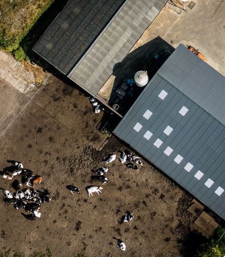 Stelling   Onteigenen van boeren om stikstofuitstoot te verminderen mag niet gebeuren