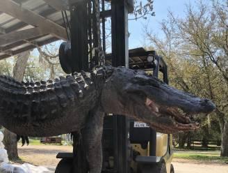 Mysterieuze verdwijning van hond na 24 jaar opgelost: dode alligator heeft opvallende maaginhoud