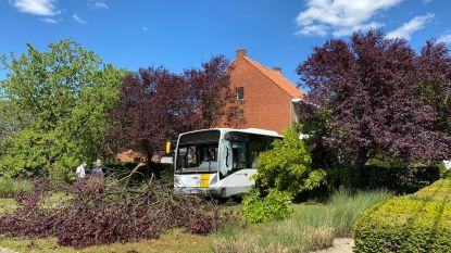 """Bus gaat uit de bocht, rijdt door drie voortuinen en komt tot stilstand tegen boom: """"Een paar meter naar rechts en ze was mijn huis binnengereden"""""""