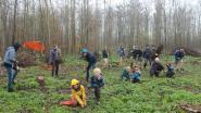 Bosgroepen bedanken particuliere bosbeheerders met 2.000 nieuwe boompjes