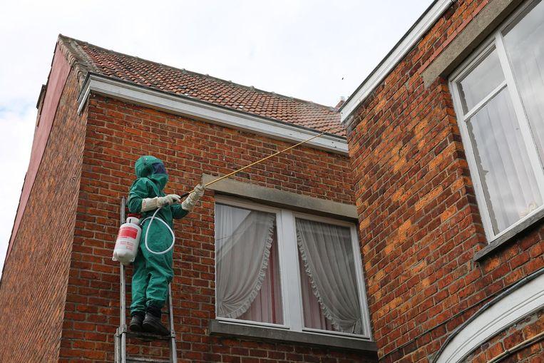 De brandweer spuit - beschermd door een pak - een giftig poeder op de ingang van een wespennest.