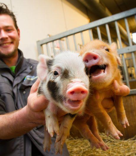 Ook de kinderboerderij in Dordrecht gaat weer open