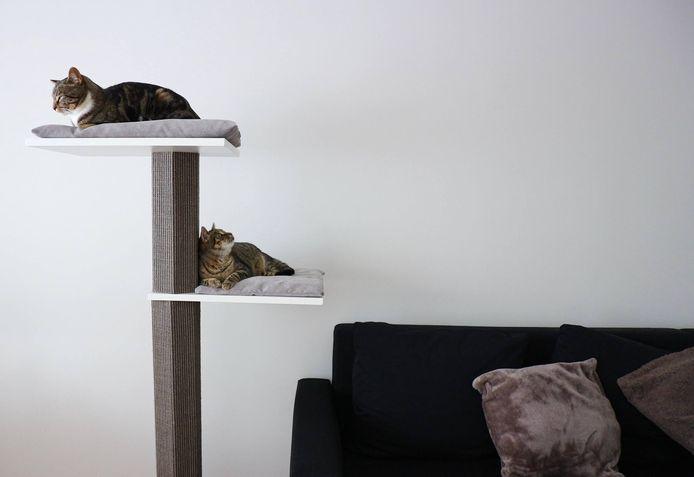 Mila en Pipa op hun krabpaal met Scandinavische, minimalistische look.