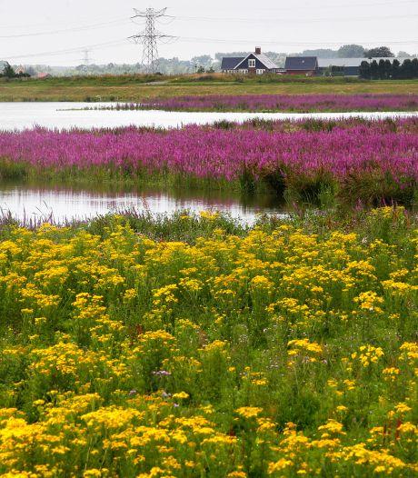 Dordrecht zoekt Klimaatburgemeester om anderen te inspireren
