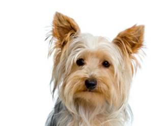 Uitgebroken hondje overleeft aanrijding niet