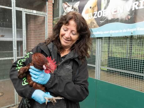 Vogelopvang krabbelt weer op na heftige periode met vogelgriep: 'We hebben best wat tranen gelaten'