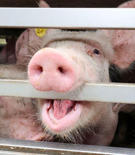 Zeven van de tien nieuwe sterrenrestaurants dieronvriendelijk: 'Michelin beloont dierenleed'