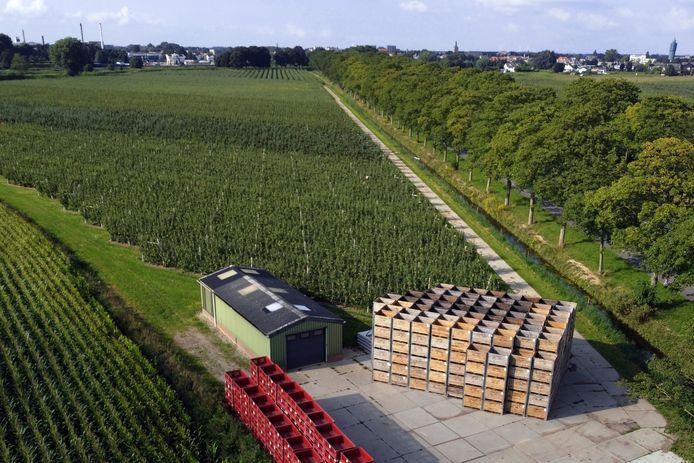 Honderden kisten staan klaar bij de boomaard langs de Zeiving in Asperen.