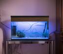 Het bijzondere voorwerp van Inas, een aquariaum. Onderdeel van fotoproject 'Vertel me alles' van fotografe Negin Zendegani.