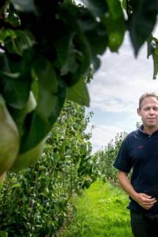 Komende dagen billenknijpen voor fruittelers: 'Veel pruimen staan al in bloei, dus spannend is het zeker'