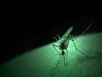 Waarom jij altijd wordt gebeten door muggen (en anderen niet)