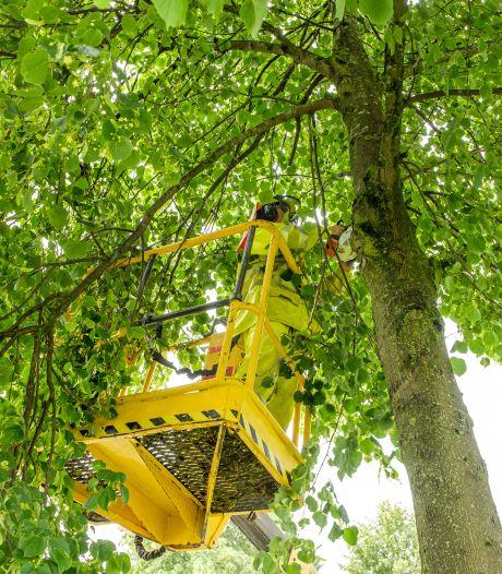 Bejaarde bomen in Zwolle puffend de zomer door: tonnen extra nodig om ze te redden
