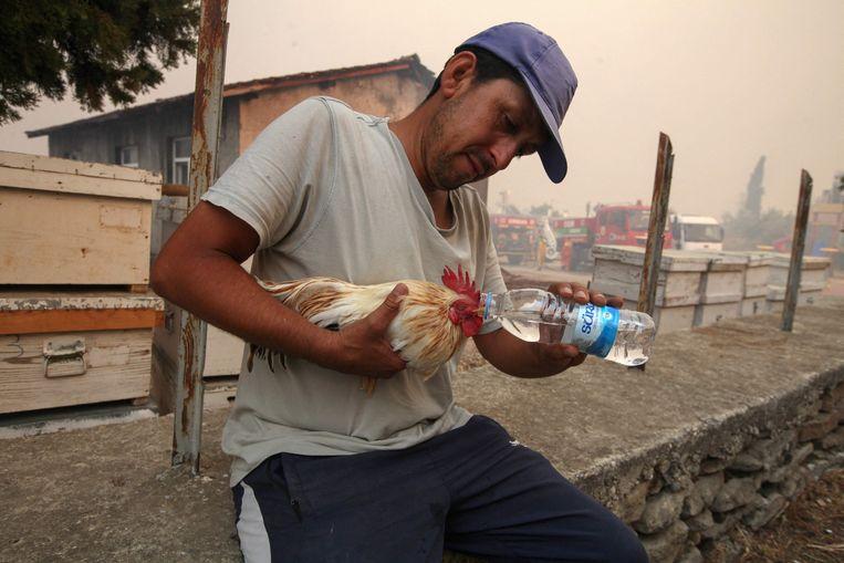 Een man geeft water aan een haan in Manavgat. Beeld AFP