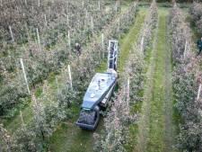 Primeurtje voor Zeeland: in Eversdijk snort de eerste zelf rijdende spuitmachine van Nederland door de boomgaard