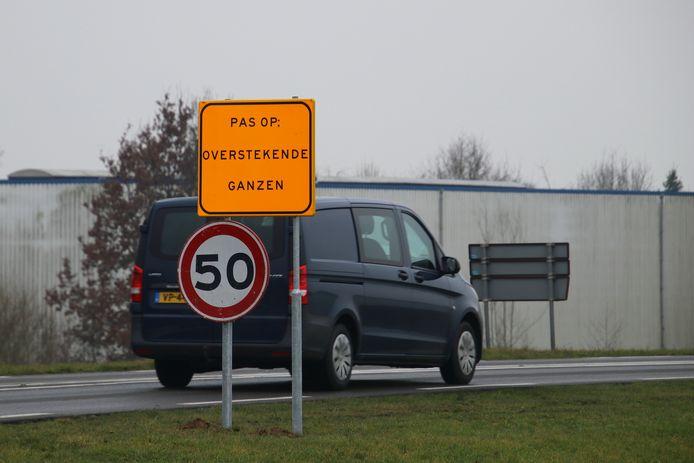 Het bord om te waarschuwen voor ganzen op en langs de N337 stond er afgelopen februari weer, maar deze keer mochten de ganzen gewoon in Wijhe blijven.