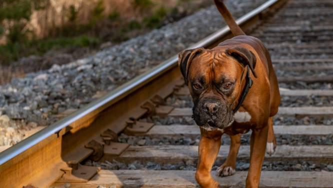 Elke dag bijna uur vertraging door dieren op de sporen