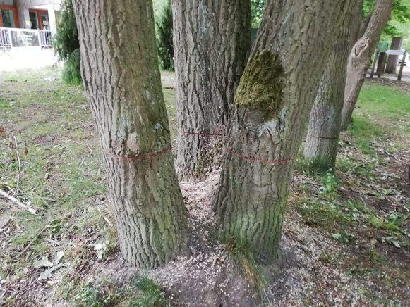 Met een kettingzaag werden de bomen zwaar beschadigd.