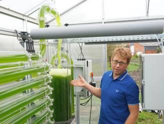 """Boer Kris (41) produceert algen met CO2 van zijn koeien: """"Geen impact meer op klimaat en alternatief voor vegetariërs"""""""