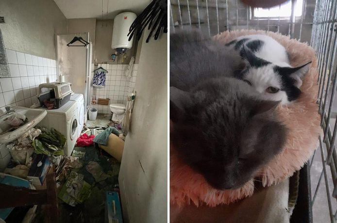 Sauvetage de sept chats dans un appartement insalubre à Verviers.