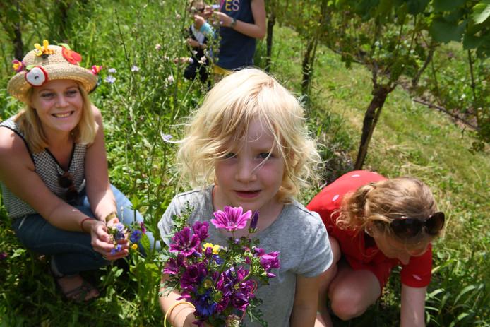 Een meisje toont trots haar bosje bloemen uit de wijngaard.
