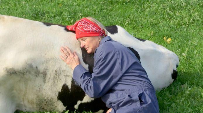 Erica knuffelt met koeien.