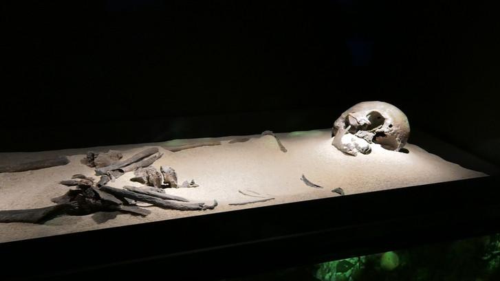 Trijntje is het oudste skelet van Nederland