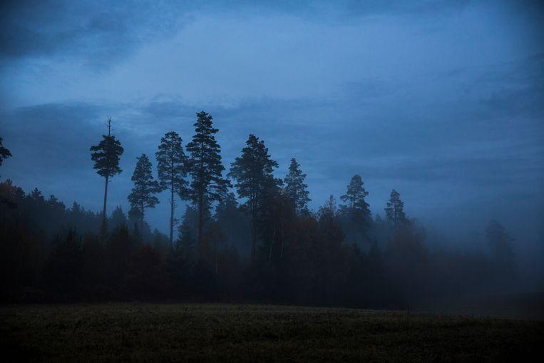 Bos bij het Estse Tartu. Beeld Marlena Waldthausen