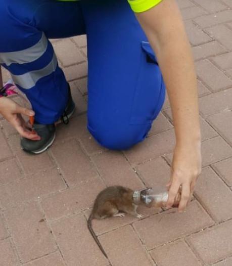 Rat met kopje vast in plastic flesje