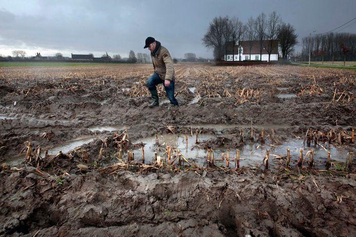 Ook de landbouwakkers, zoals deze in Moorslede, kregen veel water te slikken tijdens de julimaand. Dat blijft niet zonder gevolgen.