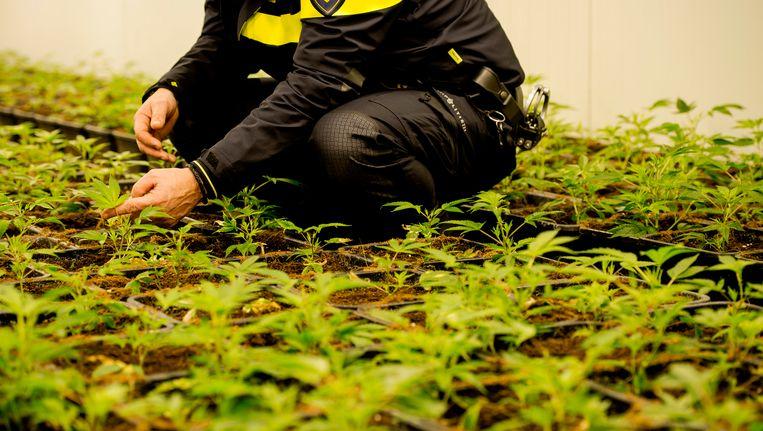 De politie trof 420 planten aan Beeld ANP