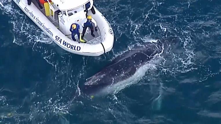 De kustwacht bevrijdt de walvis uit een visnet