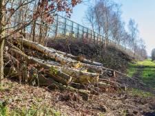Rijkswaterstaat gaat na broedseizoen door met bomenkap op talud A16 in Breda