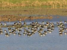 Wapenveldse Broek blijkt kraamkamer voor weidevogels