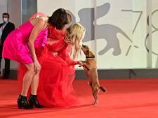 Kate Hudson et le petit chien: la scène insolite du tapis rouge de Venise