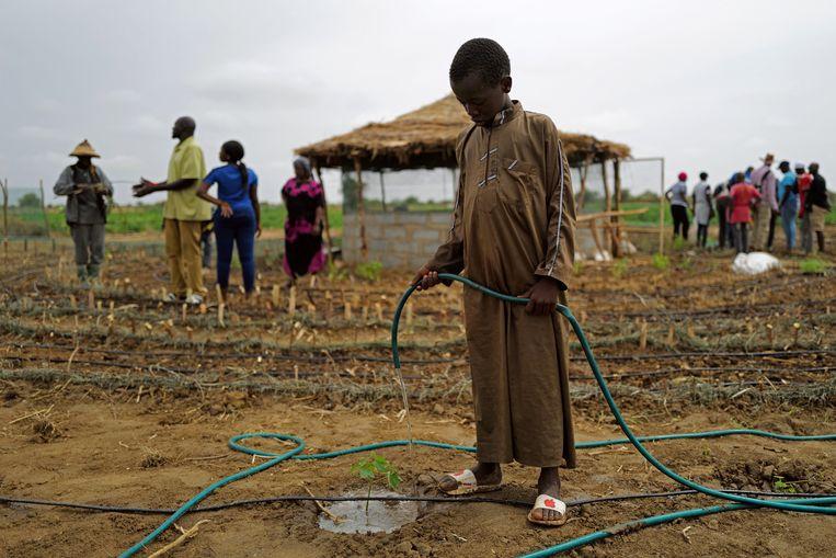De 11-jarige Baydi Wague bewatert een net aangeplant peperwortelboompje. Beeld Zohra Bensemra / Reuters
