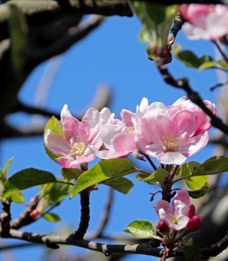 Tien mille voor meer fruitbomen en struiken in omgeving Lith: 'Geen plannen, maar planten'