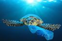 Het gevaar van plastic in de zee: schildpadden kunnen plastic aanzien voor voedsel.
