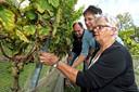 Paul Bosse, maker van prijswinnende witte streekwijnen, heeft voorlopig alle proeverijen en excursies bij zijn wijngaard Domaine De Brabantse Wal in Ossendrecht moeten schrappen.