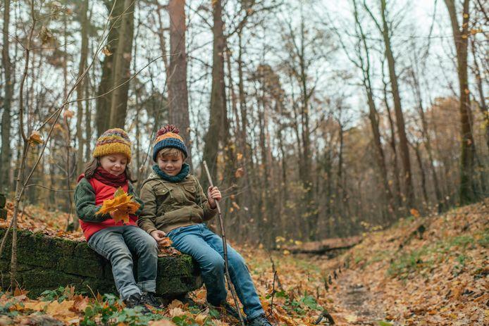 Een wandeling in het bos is altijd een goed idee. Wie weet kan je het combineren met een theaterwandeling?