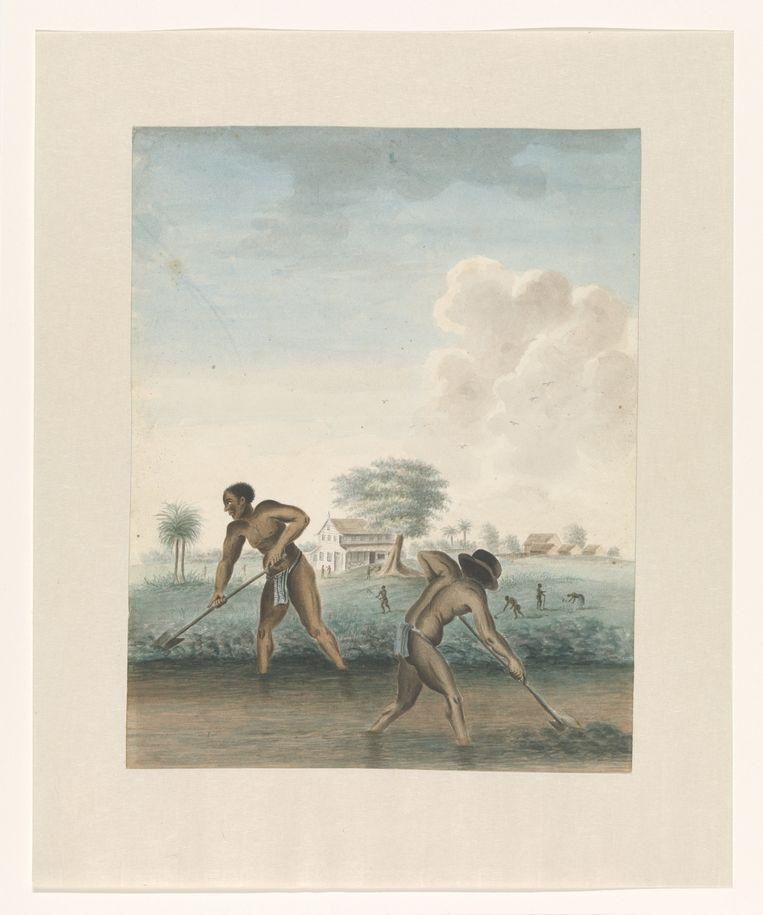 Deze aquarel van werkende slaafgemaakte mannen is te zien in Museum Van Loon. Beeld Rijksmuseum