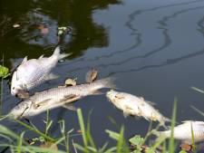 Talloze dode vissen in Gronings kanaal door ongeluk bij kaasfabriek
