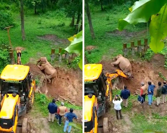 Un adorable éléphant sauvé d'une fosse par une grue
