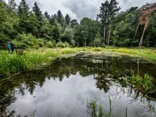 Goudvissen gedumpt in kwetsbaar bosmeertje: 'Die moeten er zo snel mogelijk uit'