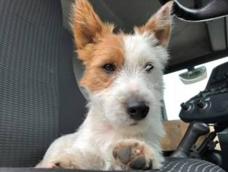 Proces rond dood hondje Dribbel uitgesteld