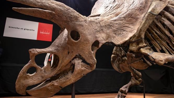 """""""Big John"""", le plus grand tricératops connu, adjugé 6,6 millions d'euros à Paris"""